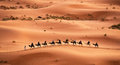 Camel caravan tourists riding camels in the sahara desert morocco Royalty Free Stock Images