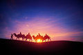 Camel caravans traveling in the desert in sunset Royalty Free Stock Images