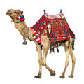Camel with colorful saddle Stock Images