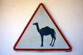 Camel crossing sign on white background Royalty Free Stock Image