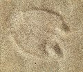 Camel foot prints in sand desert Royalty Free Stock Photo