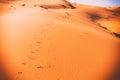 Camel footprints, Sahara, Erg Chebbi Royalty Free Stock Photo