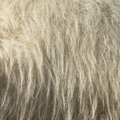 Camel fur Royalty Free Stock Image