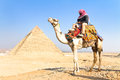 Camel at giza pyramides cairo egypt a patient with a colorful saddle waits for its owner in front of the pyramids of in vertical Stock Photo