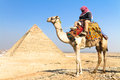 Camel at giza pyramides cairo egypt a patient with a colorful saddle waits for its owner in front of the pyramids of in vertical Stock Photos