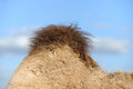Camel hump Royalty Free Stock Photo