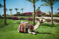 Camel lying on the grass near to palm trees Royalty Free Stock Photo