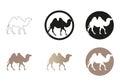 Camel minimal vector illustration