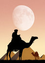 Camel and pyramids in egypt Royalty Free Stock Photo