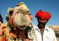 Camel on safari Royalty Free Stock Photos