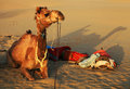 Camel in Thar Desert Royalty Free Stock Photo