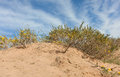 Camel thorn bushes in the desert of mongolia Stock Images
