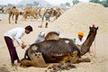 Camel traders decorating their camels during the annual camel fair pushkar india Royalty Free Stock Images