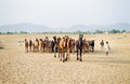 Camel traders and their camels pushkar india Royalty Free Stock Image