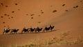A camel train in Gobi desert