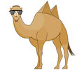 Camel wearing Sunglasses with Pyramids as Humps Royalty Free Stock Photo