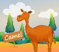 A camel with a wooden signboard illustration of Royalty Free Stock Image
