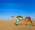 Cameleer camel driver camels in rajasthan india travel background indian with dunes of thar desert jaisalmer Royalty Free Stock Image