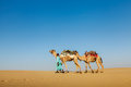 Cameleer camel driver with camels in rajasthan india travel background indian dunes of thar desert jaisalmer Royalty Free Stock Image
