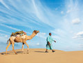 Cameleer camel driver with camels in rajasthan india travel background indian dunes of thar desert jaisalmer Royalty Free Stock Photography
