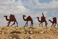 Camels caravan in the Negev desert, En Avdat National Park Royalty Free Stock Photo