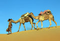 Camels in desert cameleer caravan on sand dune Royalty Free Stock Photos