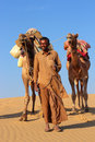 Camels in desert cameleer caravan on sand dune Royalty Free Stock Photography
