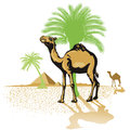 Camels in desert illustration of with palm trees and pyramids background Royalty Free Stock Images