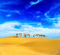 Camels desert landscape adventure travel background Royalty Free Stock Image