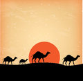 Camels design over sunset background illustration Royalty Free Stock Images