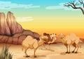 Camels living in the desert illustration Stock Image