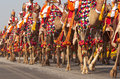 Camels on parade soldiers of the indian border security force riding their down the raj path in preparation for the annual Stock Photography