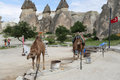 Camels in Pasabag Valley, Cappadocia, Turkey