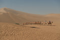 Camels returning to camp at Mingsha sand dunes Royalty Free Stock Image