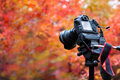 Camera on autumn background Royalty Free Stock Photo