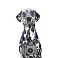 Camera hanging around the dogs neck Royalty Free Stock Photo