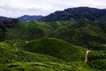 Cameron highlands tea plantation in malaysia Stock Photos