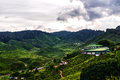 Cameron highlands tea plantation in malaysia Royalty Free Stock Images