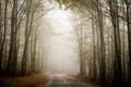 Camino forestal de niebla Imágenes de archivo libres de regalías