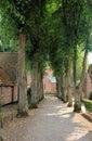 Camminata Tree-Lined Fotografie Stock Libere da Diritti