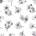 Camomile background hand drawing black and white Royalty Free Stock Photography