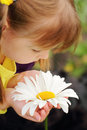 Camomile flower in the hands of pretty little girl Royalty Free Stock Images