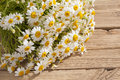 Camomile flower on old wood Royalty Free Stock Image