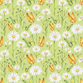 Camomile flowers and butterflies illustration