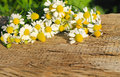 Camomile flowers on  wooden background Royalty Free Stock Photo