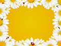 Camomile frame and ladybugs Royalty Free Stock Photo
