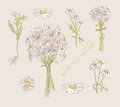 Camomile hand drawn set Royalty Free Stock Photo