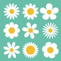 Camomile set. White daisy chamomile icon. Cute round flower plant collection. Love card symbol. Growing concept. Flat design. Gree