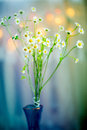 Camomile in vase fresh flowers and beautiful bokeh background Stock Photo