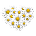 Camomiles in the shape of heart design elements Royalty Free Stock Photo